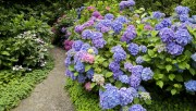 Flowers and Gardens HQ wallpapers Collection 1 F98d17108224451