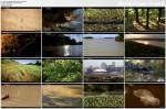 Dzika Missisipi / Wild Mississippi (2011) PL.TVRip.XviD / Lektor PL
